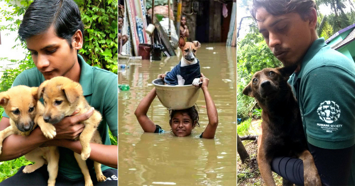 As #KeralaFloods Rage On, People Work Overtime to Rescue Stranded Animals!