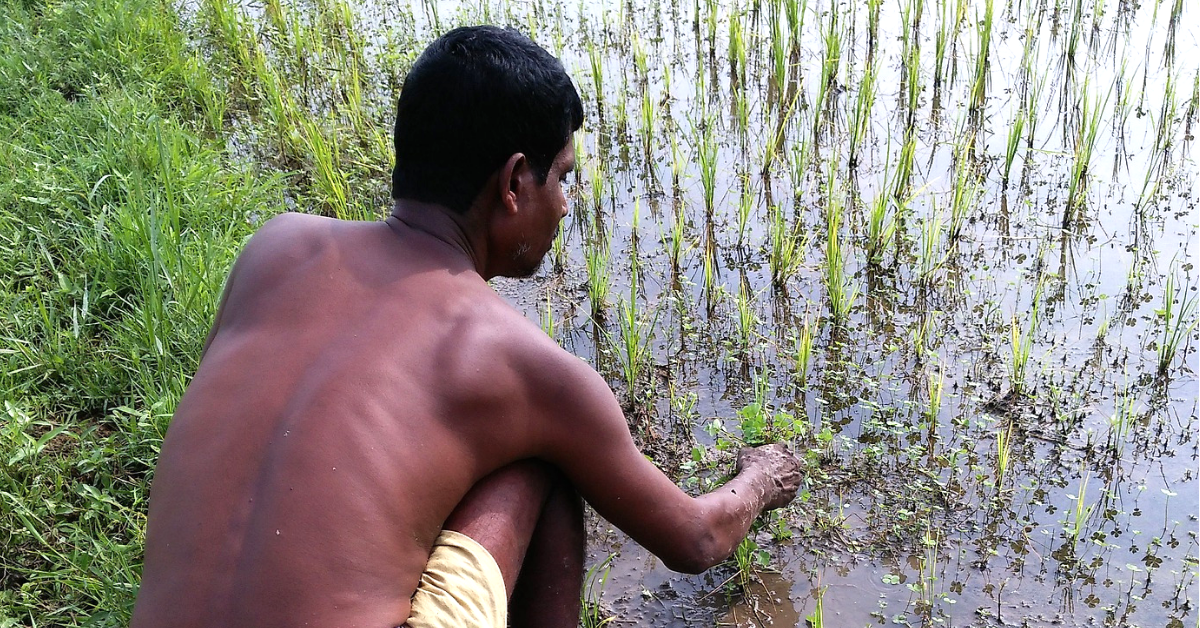 Kerala Floods: After Immense Devastation, Farmers See A Glimmer of Hope