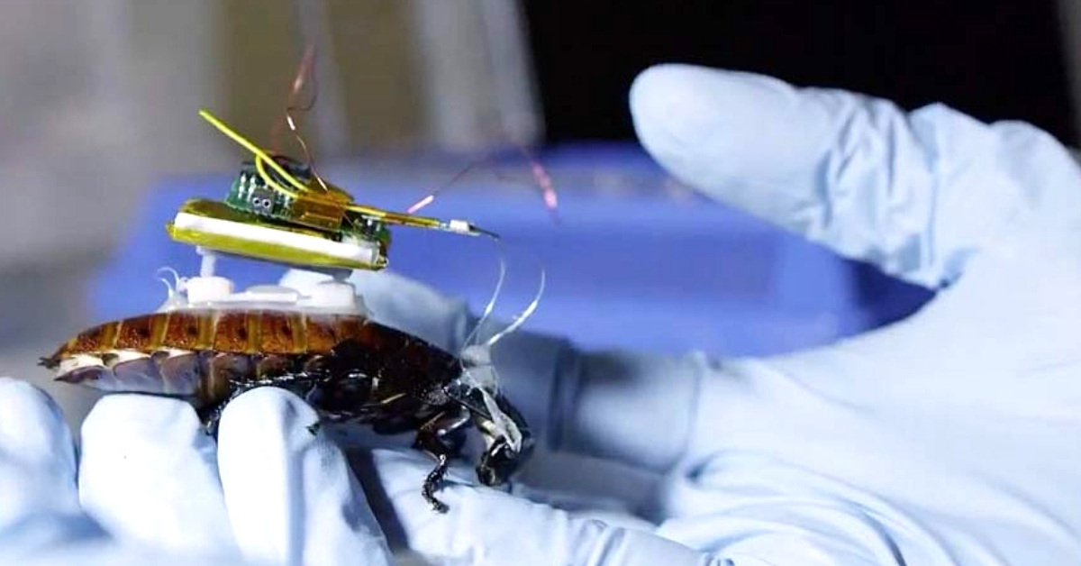 Indian Origin Scientists Develop Cyborg Cockroaches, May Save Lives One Day!