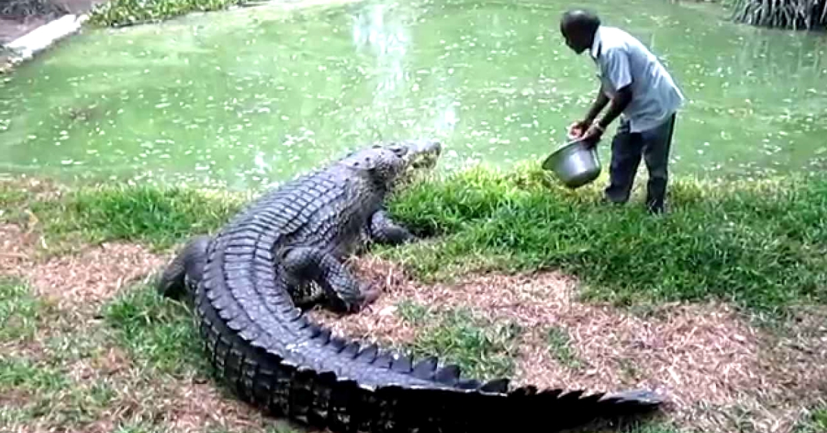 When Man & Crocs Become Best Friends: Meet the Crocodile Whisperers of India!