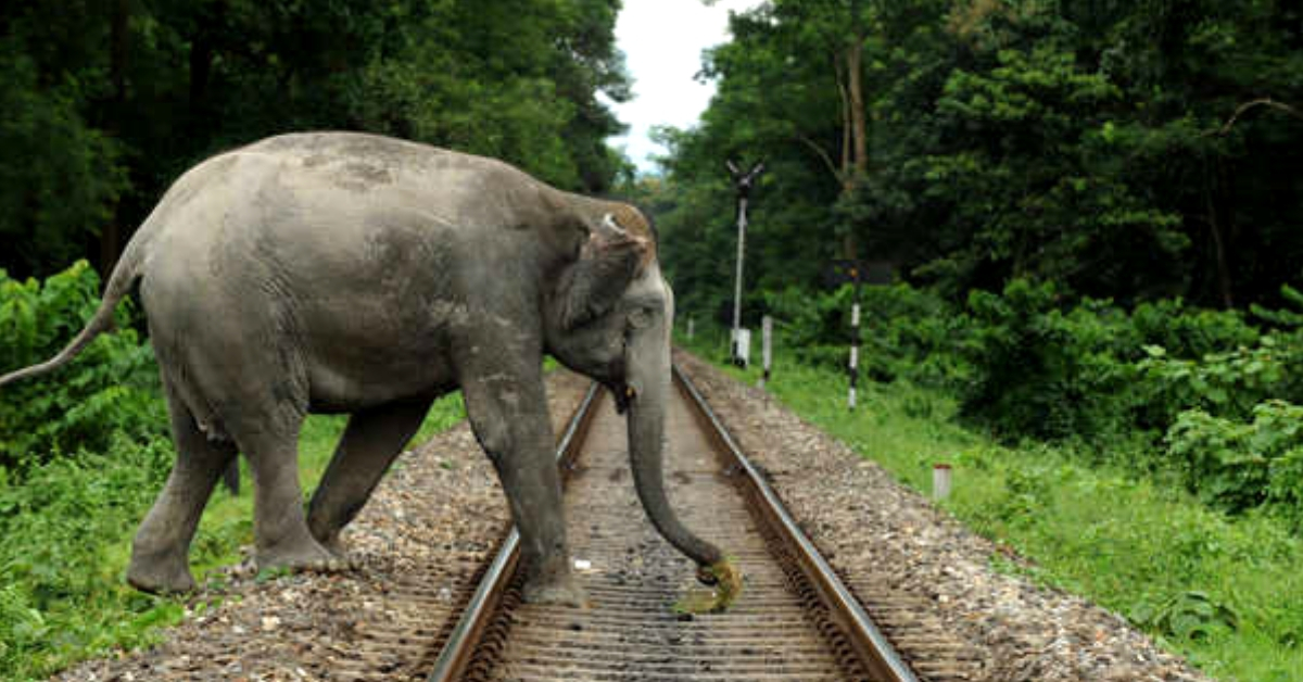 Brilliant! IIT Delhi Finds Ingenious Solution to Stop Elephant Deaths Due to Train Accidents!