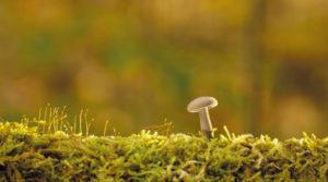 Fungi plants Indian scientists