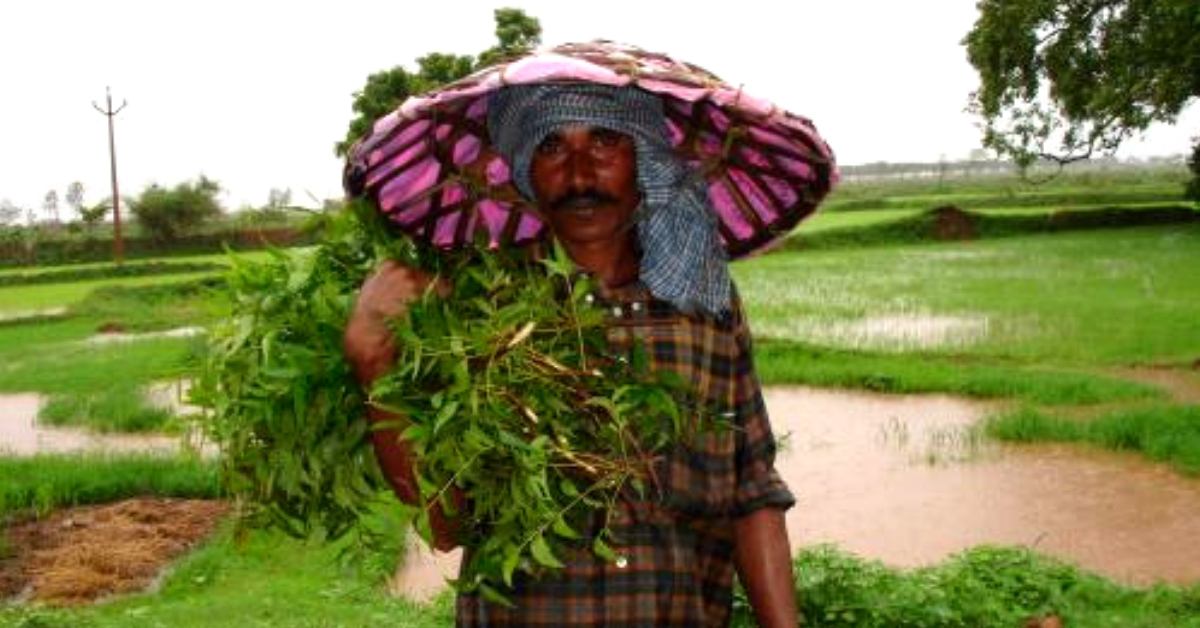 Indian Scientists Reveal How Cells of 'Wonder Leaf' Neem Produce Useful Chemicals!