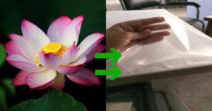 Biodegradable film lotus stem starch eco-friendly science innovation