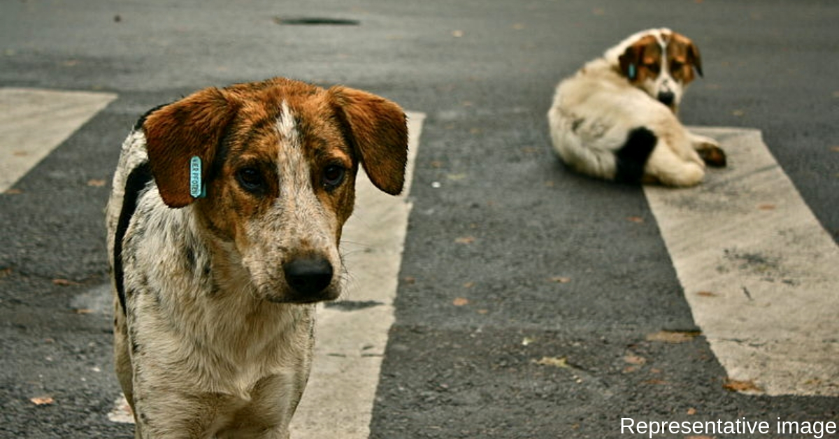 Chennai Residents Turn Stray Dogs into Friendly Defence Force: A Lesson for Us All?