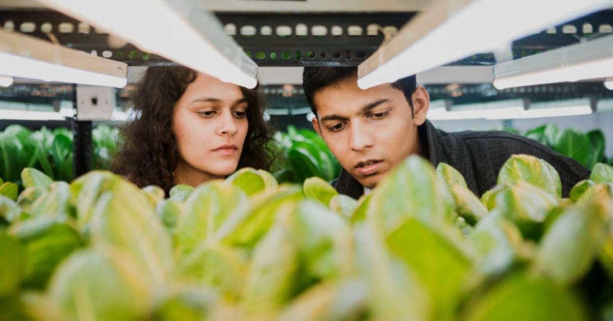 Seeking Fresh Produce, Mumbai Duo Quits Jobs to Grow over 1,000 Plants Soil-Less!