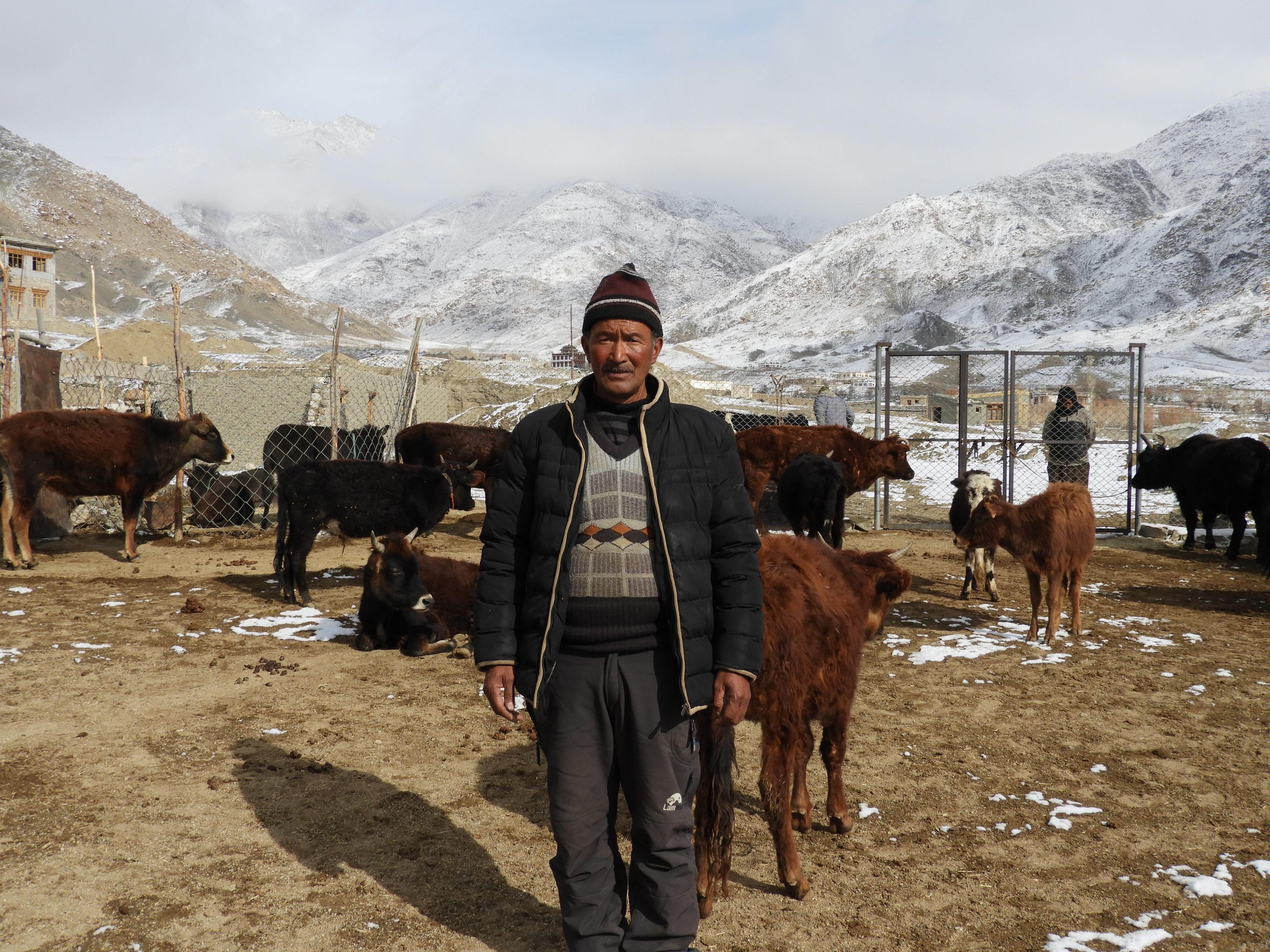 Tsering Dorjay with his animals. (Source: Rinchen Angmo/Reach Ladakh)