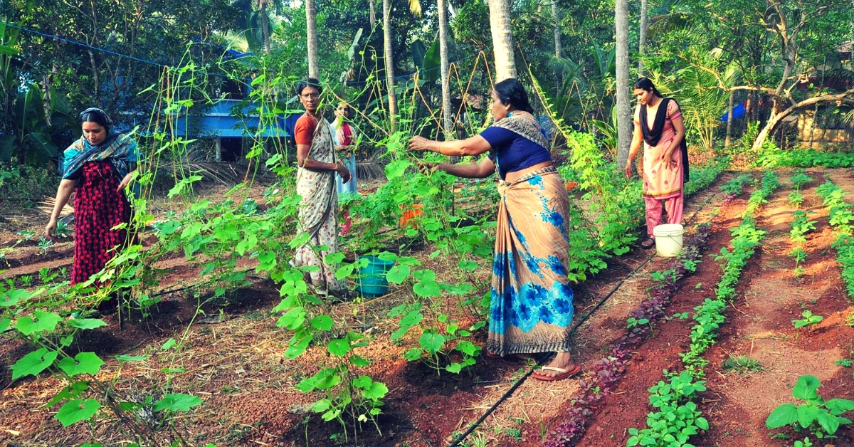 Rattled by 7 Cancer Cases, Kerala Villagers Join Hands to Turn 63 Acres Organic!
