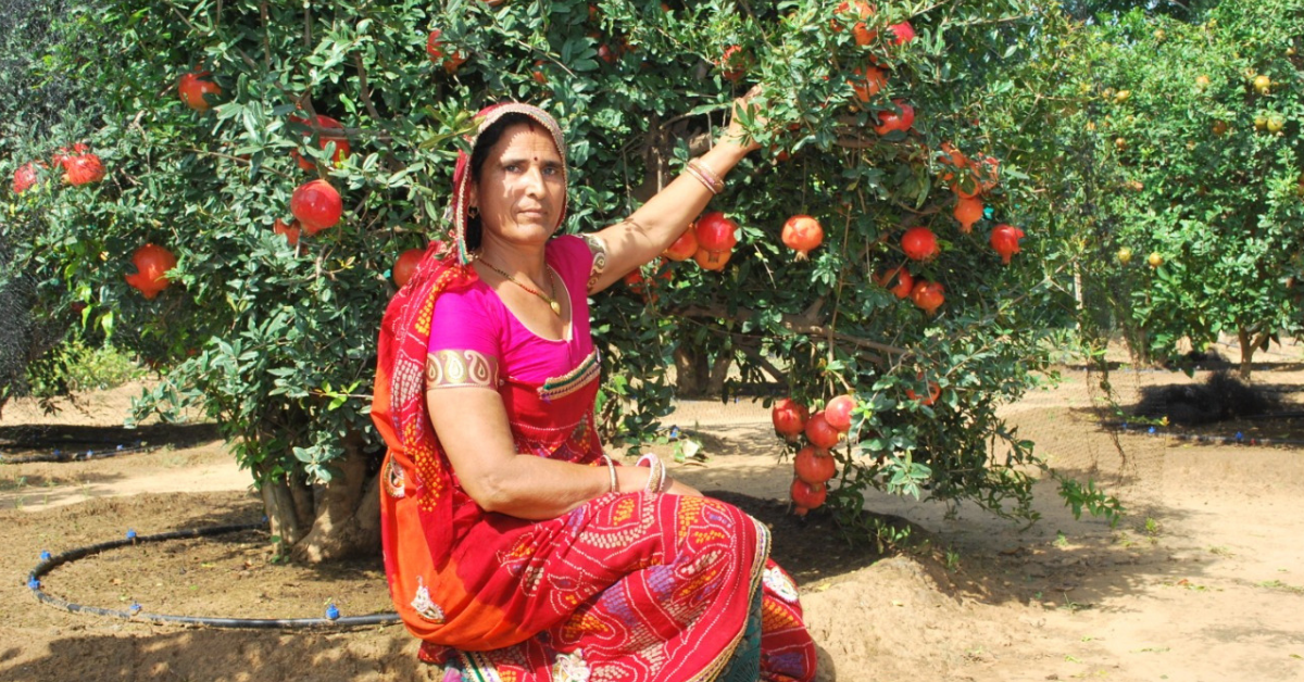 25 Lakhs From 1.25 Acre: Rajasthan Woman Grows Pomegranates & Apples on Barren Land!