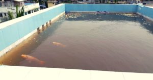 Assam Man Farms Fish in Rooftop Pond, Turns Kitchen Waste into Biopesticides!