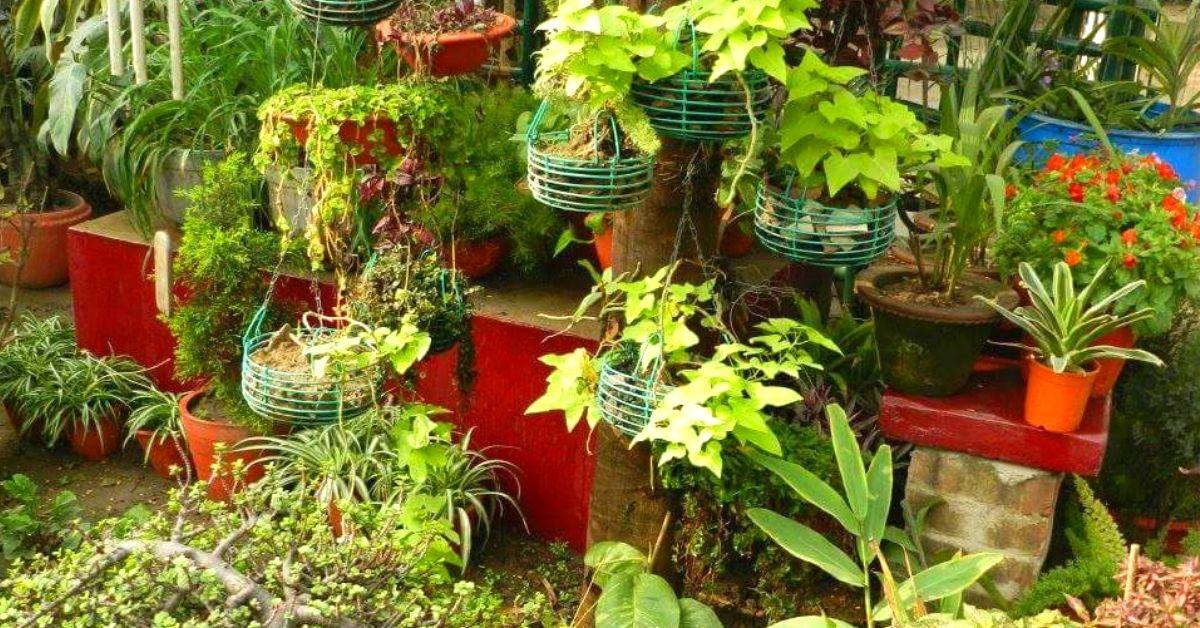 Bihar Man Grows 300+ Plants Around School, Creates Award-Winning Paradise!