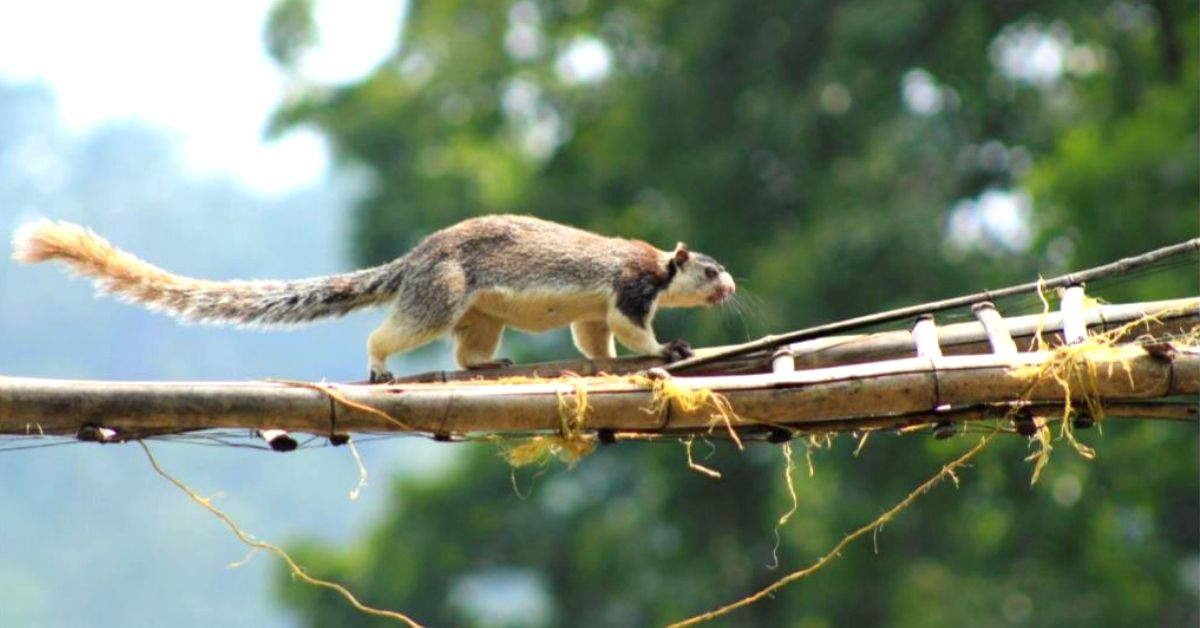 Kerala Sanctuary Builds 'Canopy Bridges', Saves Tree Animals From Road Hits!