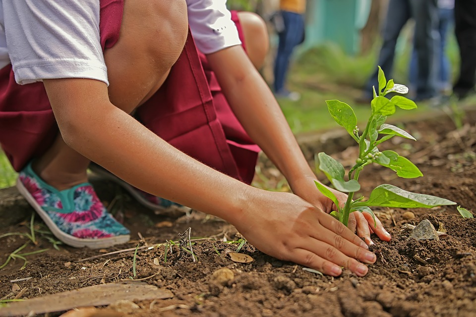 Rajasthan Makes Planting Trees, Digging Ponds Compulsory For Engineering Students!