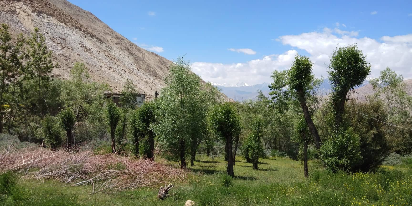 A scenic patch of green in a cold desert. Tashi's efforts made this possible. (Source: Tsetan Dolkar)