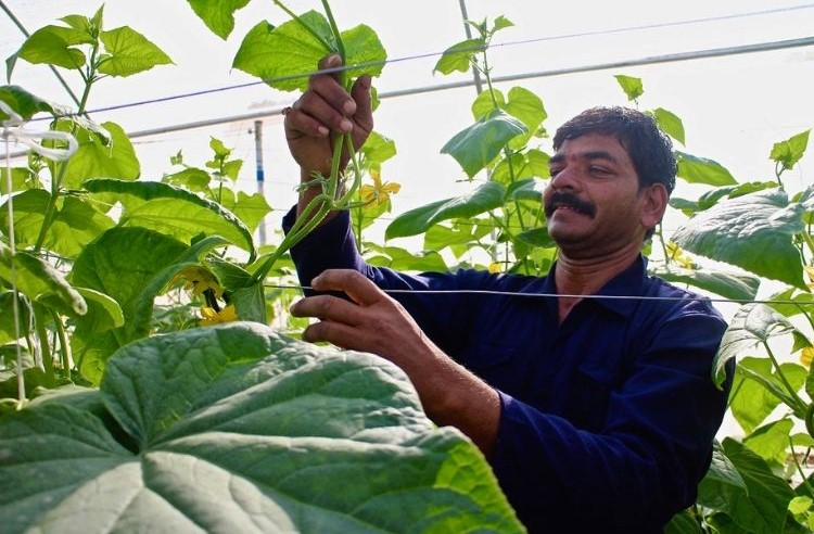 Telangana Startup's 'Greenhouse-in-a-Box' Saves Water, Doubles Farmer Incomes!