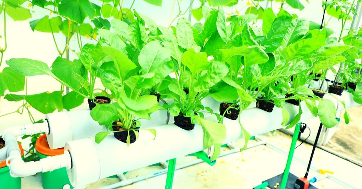 8 Hydroponics Startups Helping Urban Indians Grow Their Own Food!