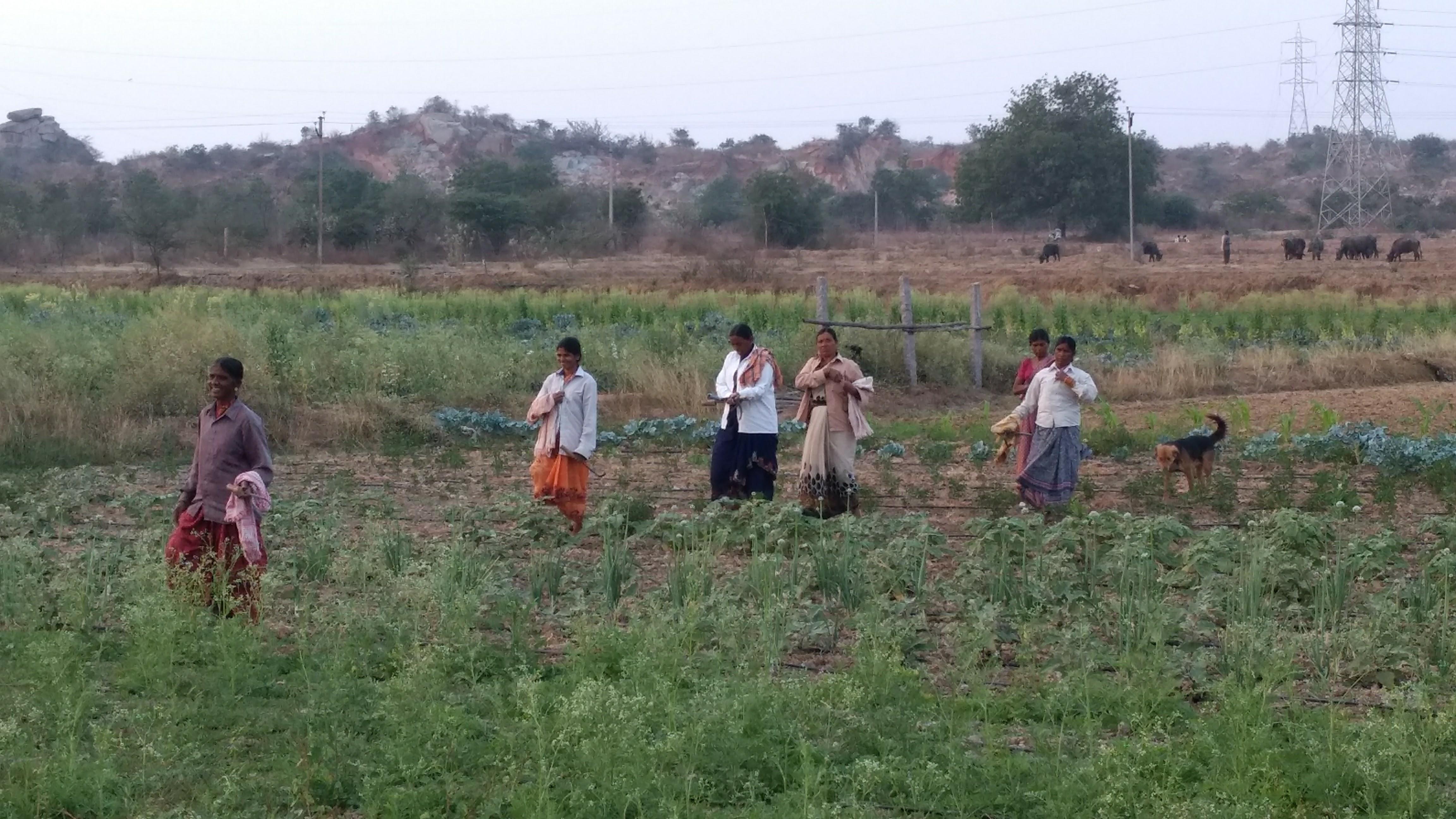Telangana sustainable home UK couple grow food forest inspiring india