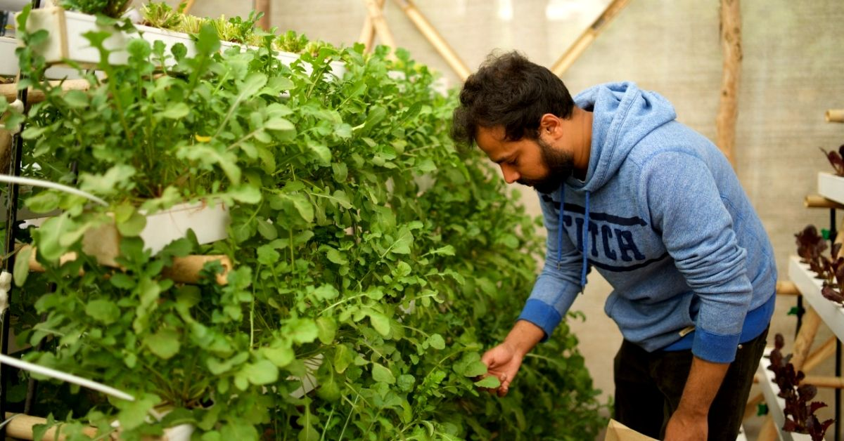 Delhiites, Learn How to Set up a Hydroponic Farm on Your Terrace in Just 1 Day!