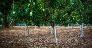 telangana Family turn land fruit forest organic mango sustainable workshop india