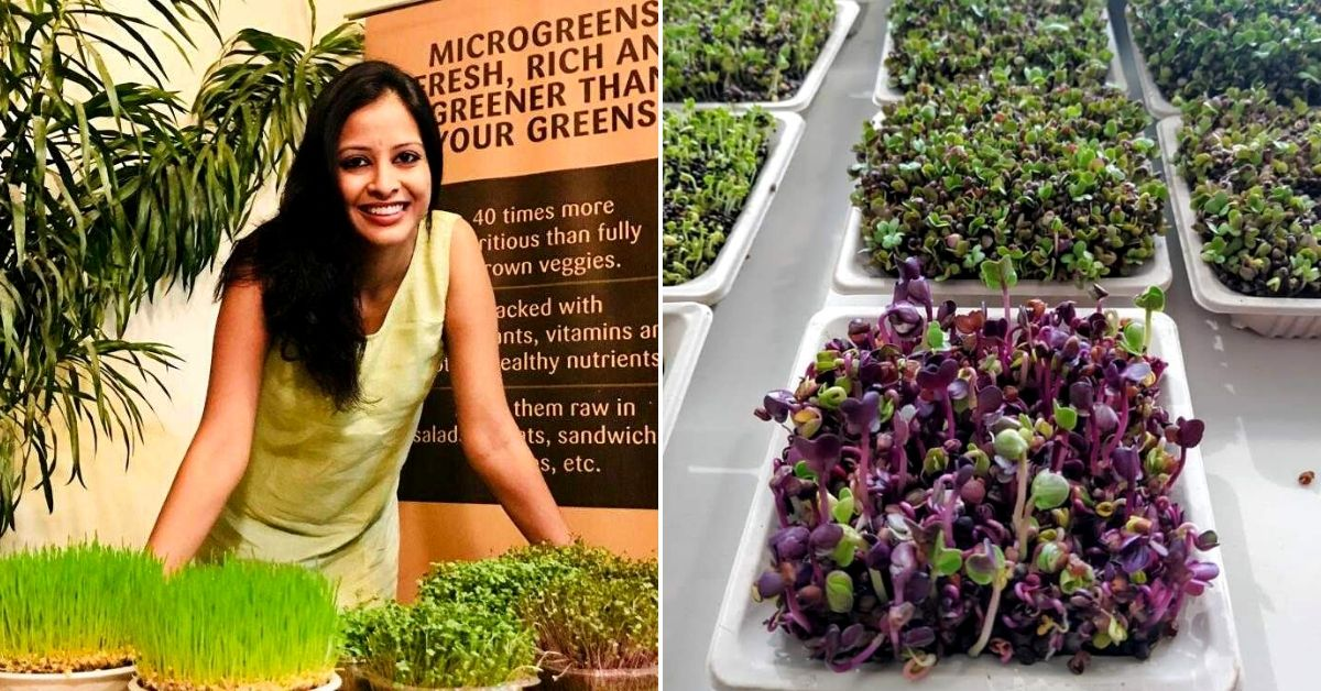 Delhi, Learn to Grow Microgreens in Just 3 Hours from a Mom Who Sells 500 Pots/Month