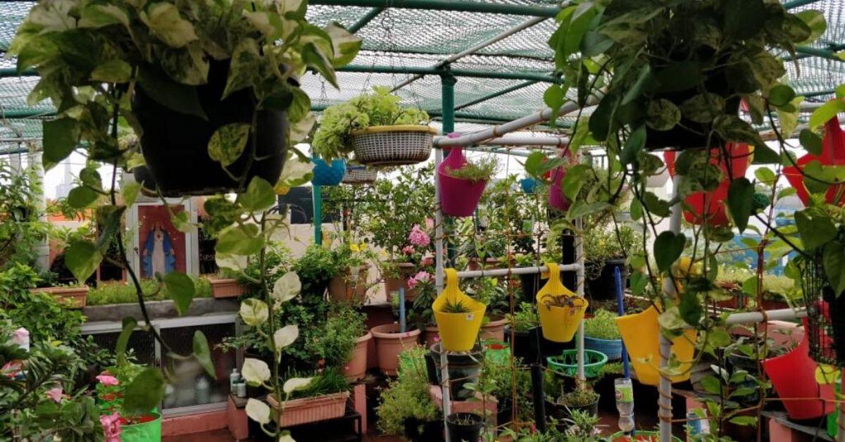 Organic Food & Rainwater Harvesting: Chennai Woman's Zero-Waste House is Goals