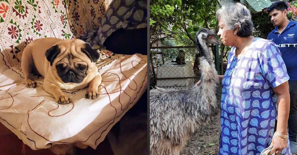 From 400 Dogs to Buffaloes & Goats: A Magical Visit To Delhi Woman's Unique Shelter