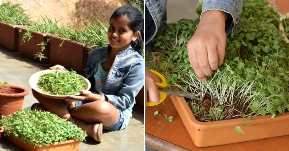 Mumbai, Learn to Grow Microgreens & Eat Healthy for Life!