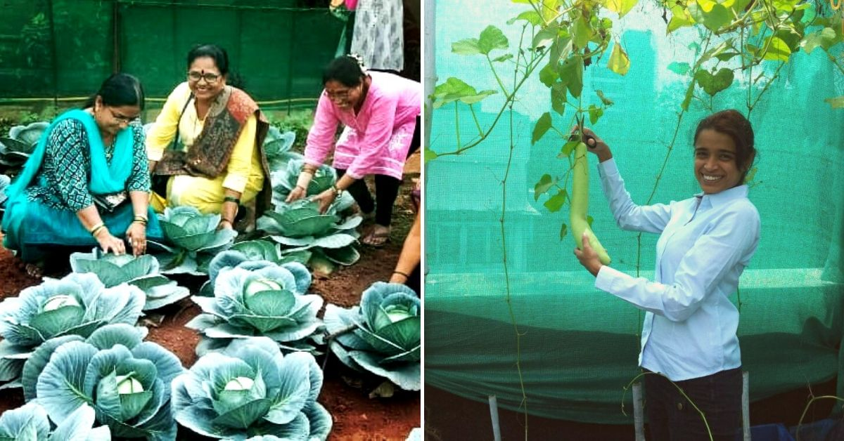 Come Rain or Shine, Here's How You Can Grow Organic Veggies in Mumbai