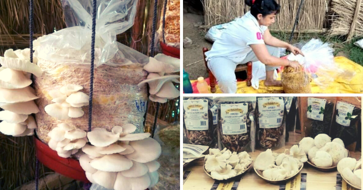 Experts Answer: How To Grow Mushrooms At Home For Just Rs 300