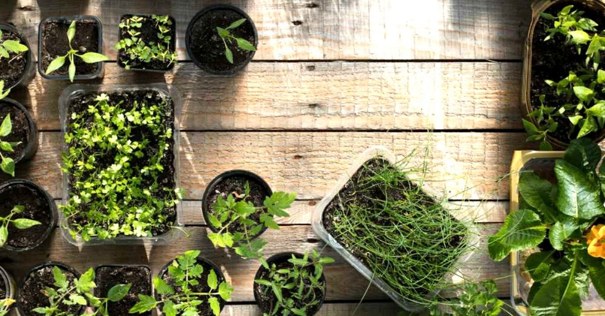DIY Green Haven: Easy Steps to Grow a Home Garden