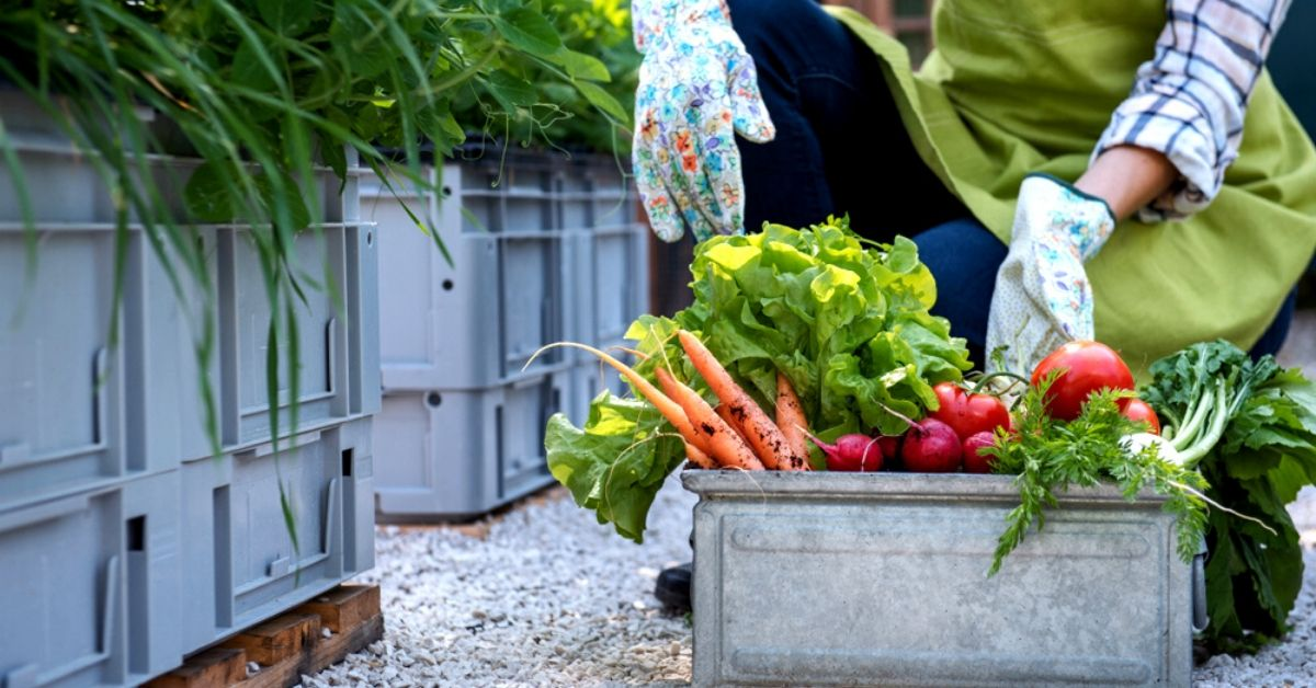 Go On a 'Low Carbon' Diet: 4 Easy Ways to Reduce Your Food's Carbon Footprint