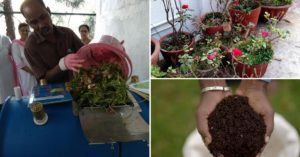 compost agony aunt