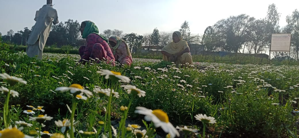 organic farming women Punjab