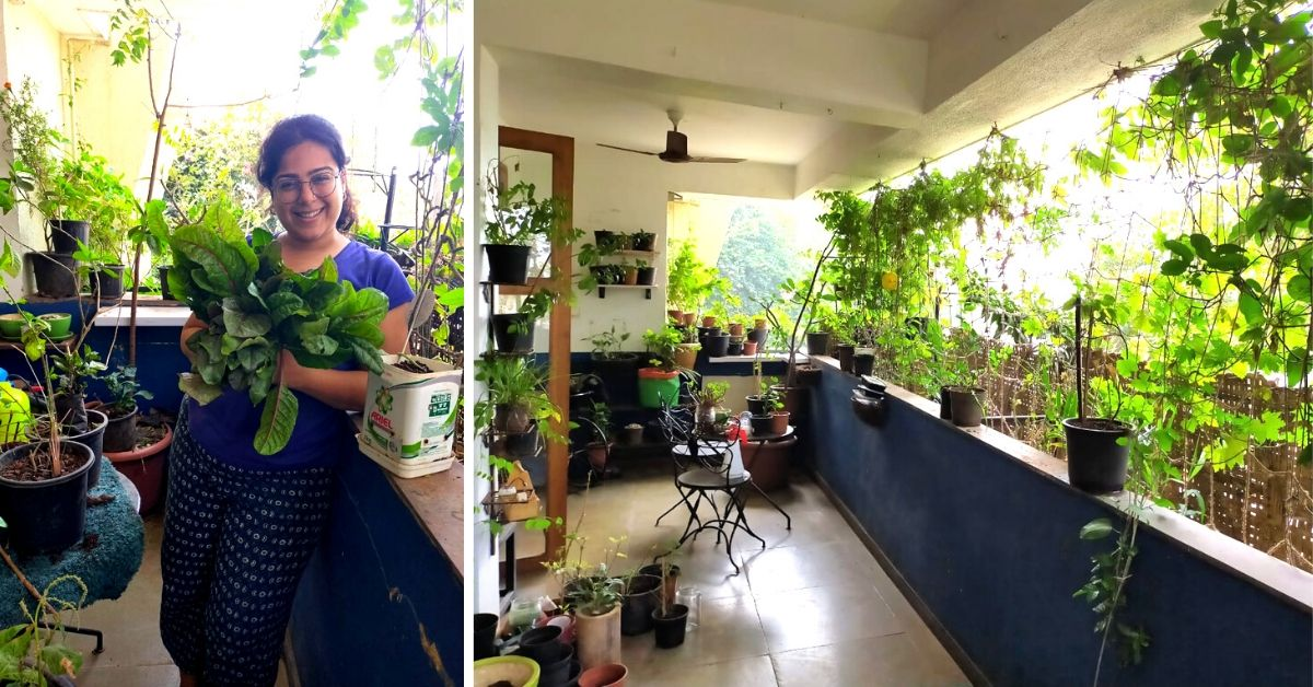 Mumbai Woman Shares How to Grow 30+ Edible Plants in Apartment Balcony