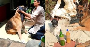 Bengaluru natural pet wash