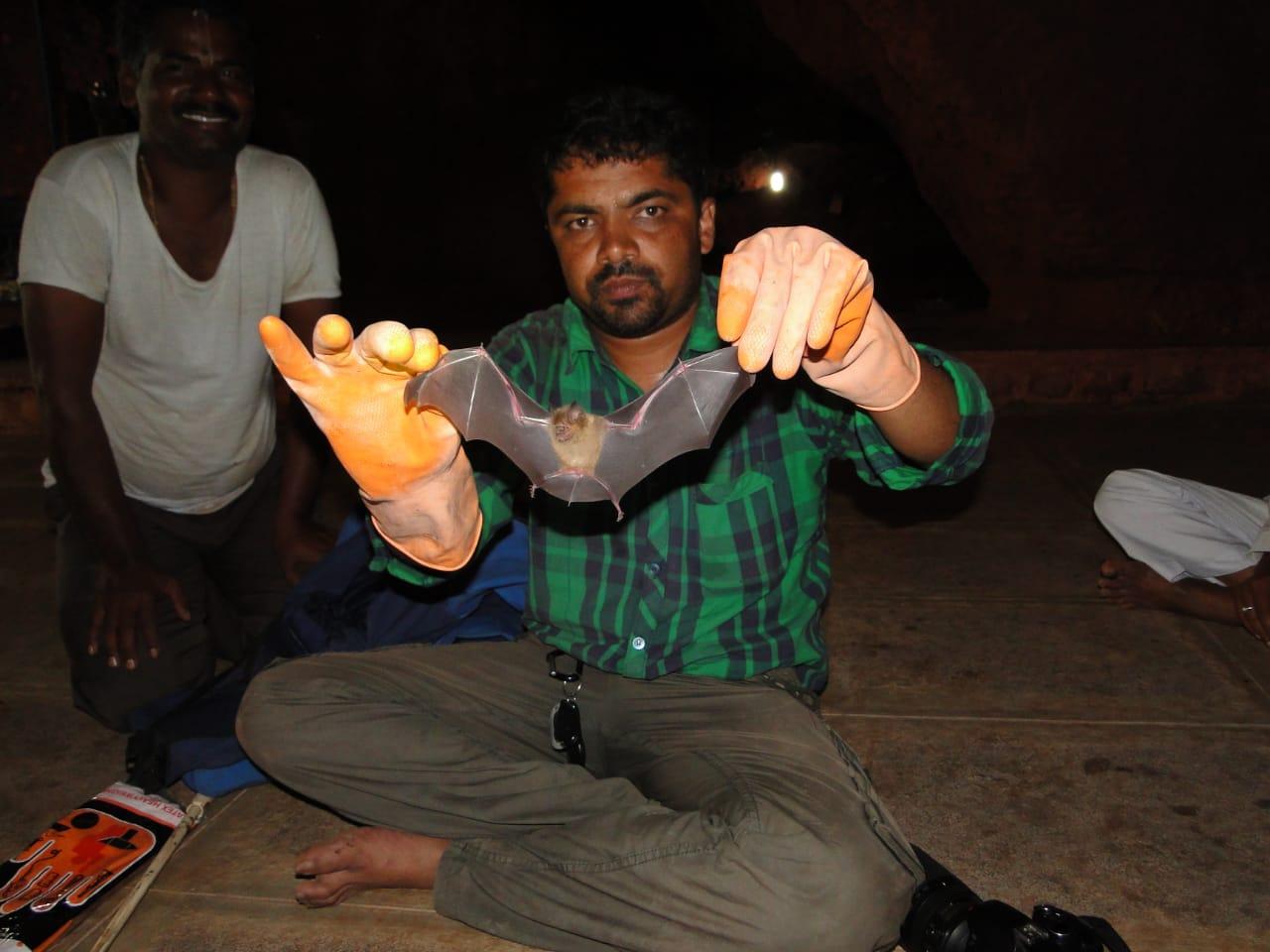 'Humans Spread COVID-19, Not Bats': Maharashtra's 'Bat Man' Busts Myths