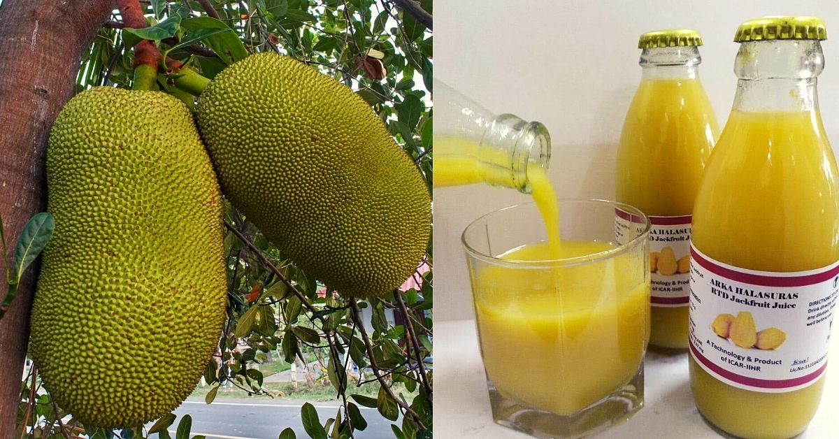 After Three Years Research, Scientists Develop Instant Jackfruit Juice & Chocolates!