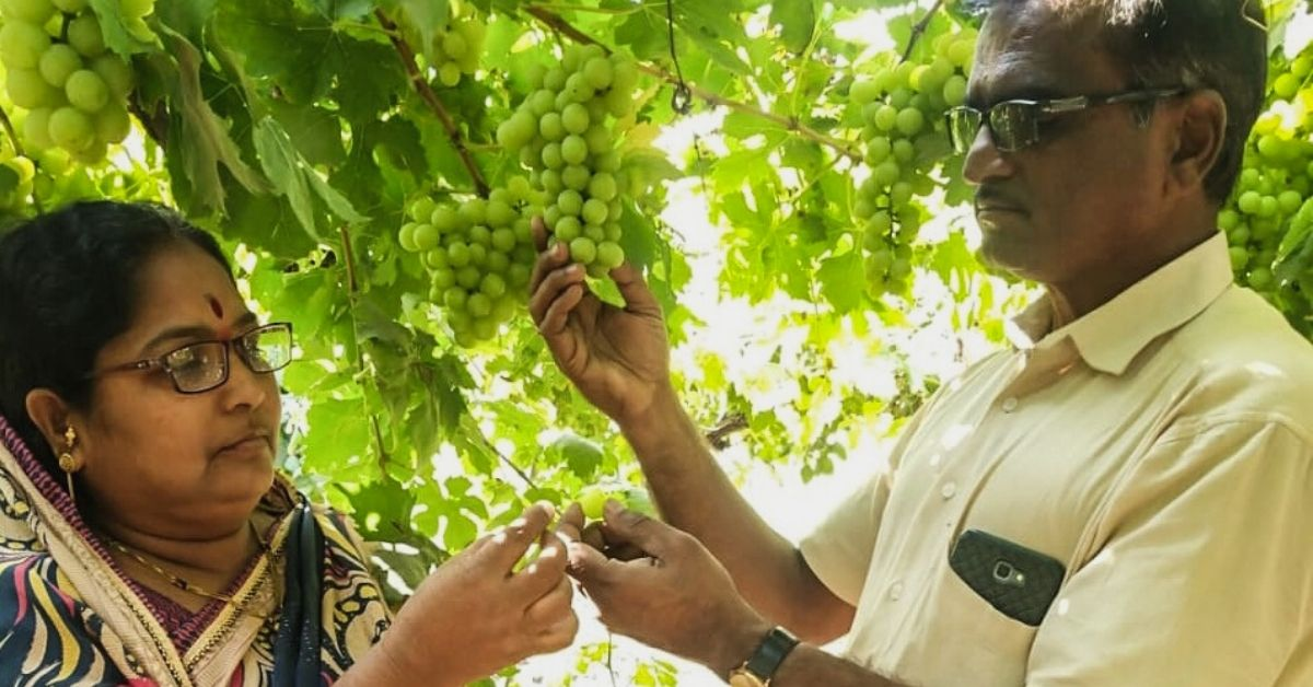 After 20 Years of Work, 55-YO Farmer Develops Grape Variety With 40% Higher Yield