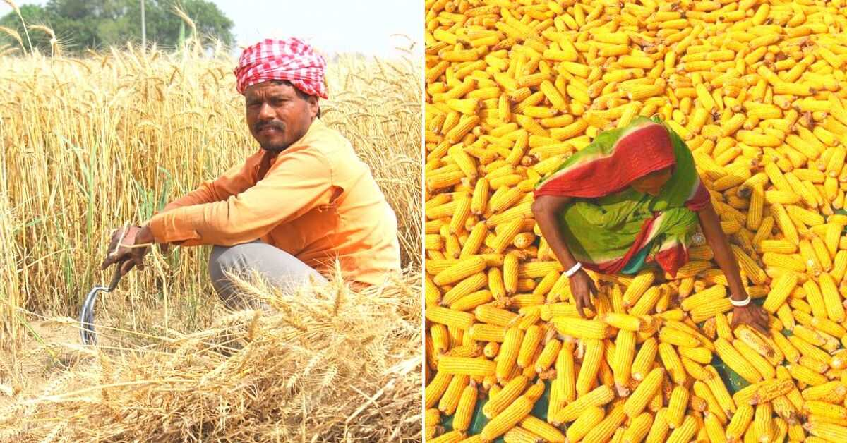 Here's How Experts Believe We Can Make India's Farmers Worry-Free