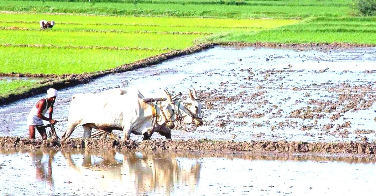 3 Entities Share The Private Sector Ideas That Can Transform India's Farmers