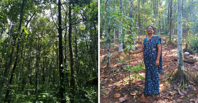Woman Spends 28 Years Creating A Lush Forest That Solved Her Village's Water Woes!