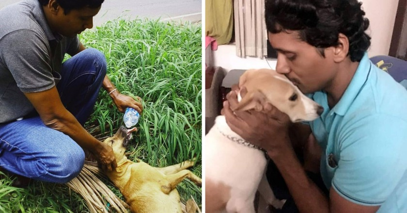 Kerala Man Spends Rs 20,000 a Month on Stray Animals, Has Rescued Over 1000!