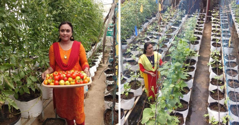 How 500+ Plants in Grow Bags Give This Woman Chemical-Free Food at Home