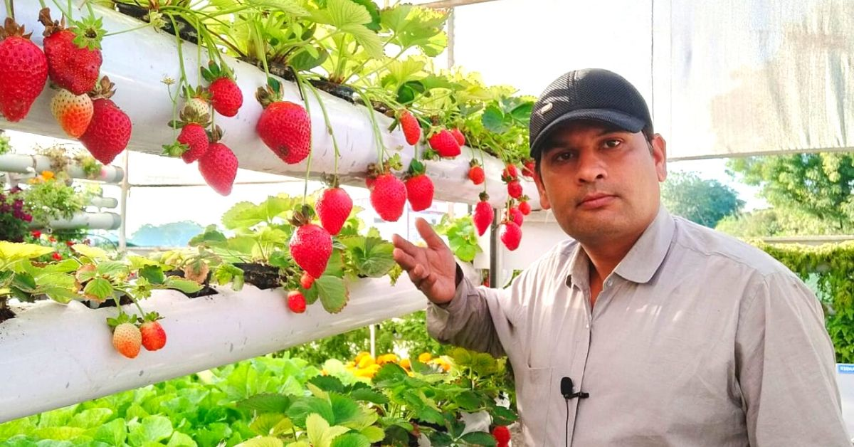 MP Farmer Grows 'Soil-less' Strawberries In 3,000 Sq Ft, Profits Rise By 70%