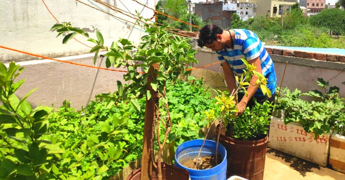 Rajasthan Man's Zero-Budget Terrace Garden Helps Him Save Rs 4,000/Month!