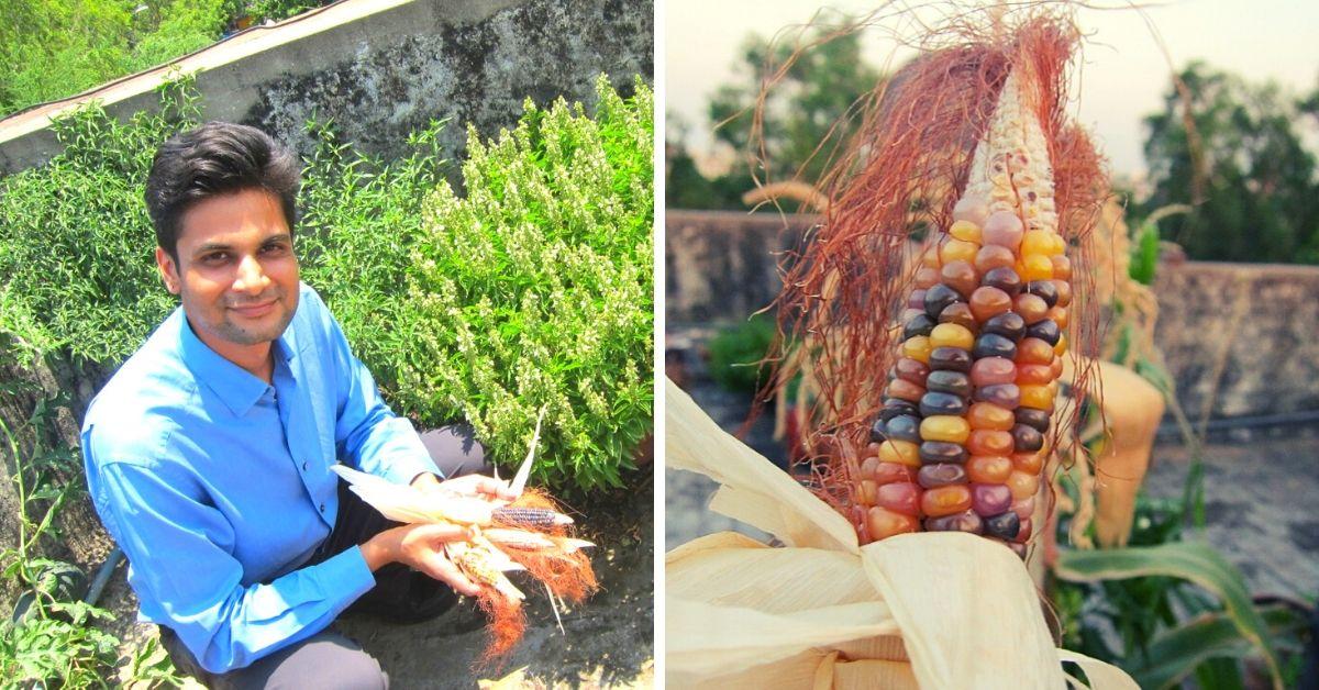 Delhi Family Sets Up Terrace Garden With Rs 500, Grows Gem Corn & 35 Rare Plants