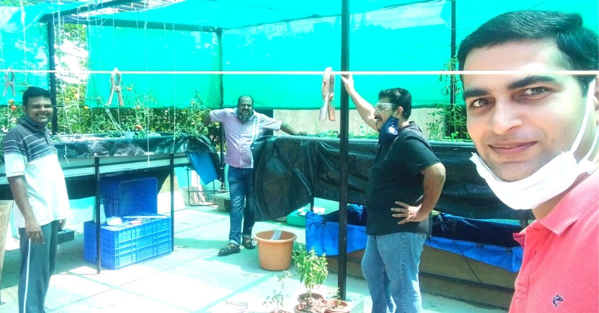 With Limited Water and Fish Waste, Bengaluru Friends Grow Exotic Greens on Terrace
