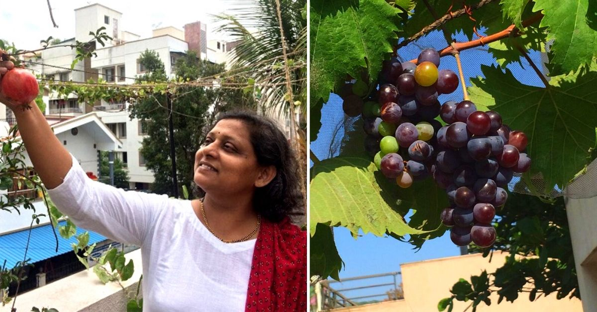 Pune Homemaker Explains How to Grow Organic Grapes & Strawberries at Home