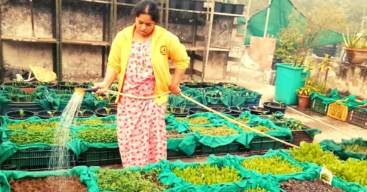My Garden Gives Me 5 Kilos of Organic Veggies & Cool Air Every Day. Here's How