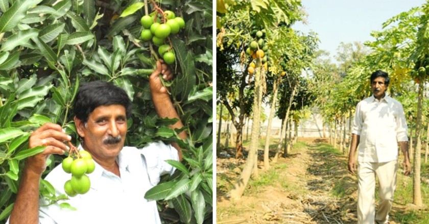 17 Acres Of Barren Land Now Flourishes With Rice & Apples, Thanks to 66-YO Farmer